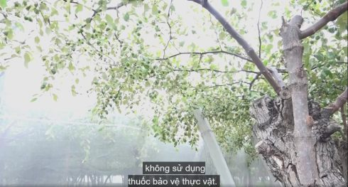 luoi mung 64 lo chat luong gia si